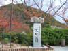 2006_063